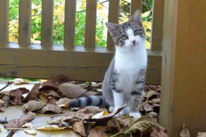 Kleine Katze Paula im Herbstlaub