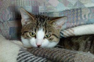 Djie kleine Katze Paula kuschelt sich in eine Decke