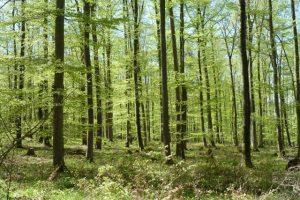 Der Wald im Frühling