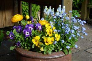 Frühlingsblumenschale mit Hornveilchen, Vergissmeinicht und Ranunkel