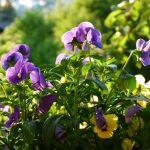 Der Garten im Frühling: Viele Blumen, Salat im Hochbeet und im Blumenkasten