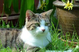 Katze Paula liegt im Gras