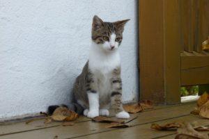 Kleine Katze Paula im Herbst