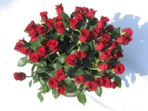 Ein Strauß roter Rosen im Sektkübel