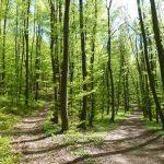 Der Wald im Frühling tut Körper und Seele gut