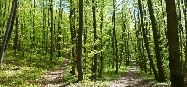 Im Frühlingswald verzweigt sich der Weg