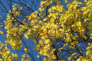 Blauer Himmel mit Herbstlaub