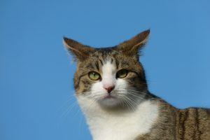 Katze Paula vor blauem Himmel