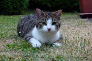 Katze Paula im Gras
