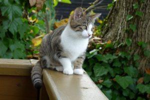 Die Katze Paula sitzt auf dem Balkongeländer