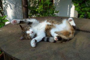 Paula schläft ganz entspannt