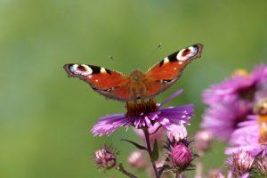 """Gedicht """"Der Schmetterling"""""""