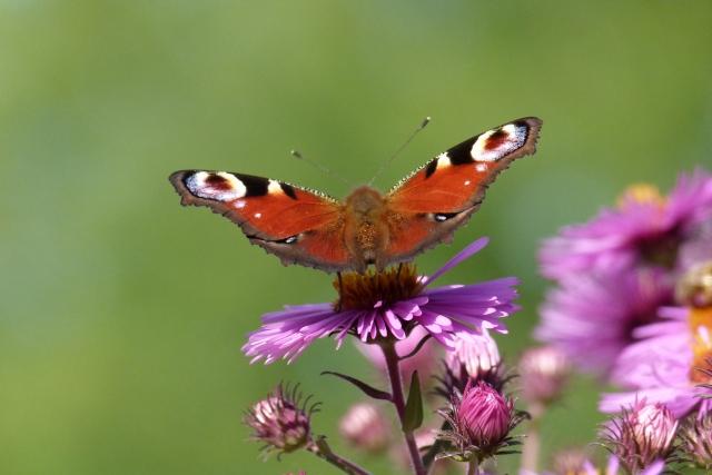 """""""Der Schmetterling"""" Ein Gedicht zum Geburtstag mit passendem Glückwunsch für einen besonderen Menschen"""