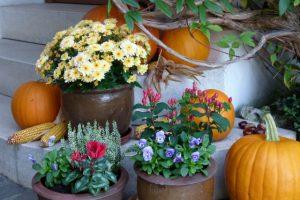 Blumentöpfe mit verschiedenen Herbstblumen