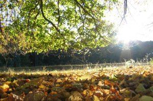 Die Sonne scheint auf das Herbstlaub