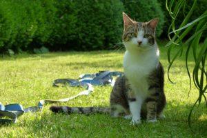 Katze Paula sitzt im Garten