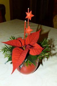 Weihnachtssterne gehören zum Advent