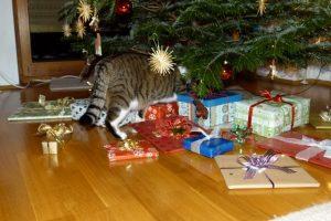 Katze Paula schaut, ob für sie auch ein Geschenk dabei ist