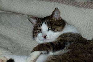 Katze Paula ruht sich aus - für neue Abenteuer