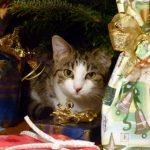 Katze Paula und der Weihnachtsbaum