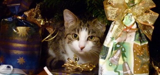 Katze Paula liebt den Weihnachtsbaum