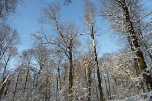 Ein wunderschöner Wintertag im Wald