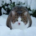 Katze Paula im Schnee