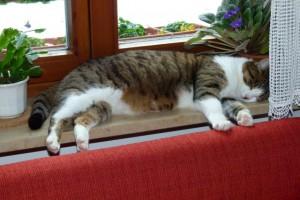 Katze Paula schläft auf dem Fernsterbrett