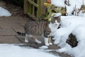 Katze Paula im Winter auf der Terrasse