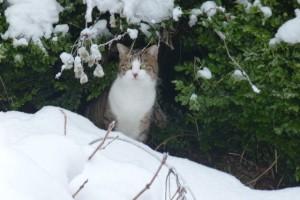 Katze Paula im schneebedeckten Garten