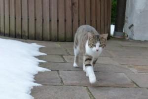 Wenn es möglich ist läuft Katze Paula da, wo kein Schnee liegt
