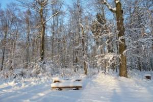 Wunderschön verschneite Bank im Winterwald