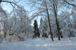 Waldspaziergang im verschneiten Wald
