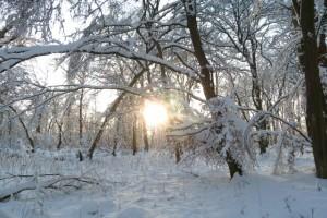 Die Wintersonne scheint durch die Bäume
