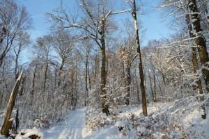 Ein Waldspaziergang im Winter bei Schnee und stahlendem Sonnenschein
