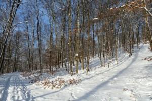 Schnee, Wald und blauer Himmel