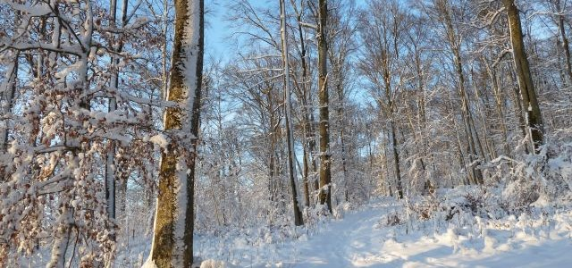 Schnee, Sonne und Wald