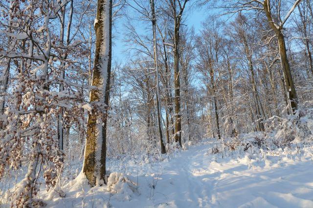 Spaziergang im verschneiten Winterwald