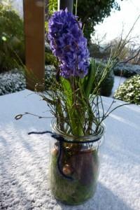 Blaue Hyazinthe mit Dekoration im Einmachglas