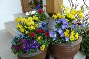 Frühlingsdekoration: Verschiedene Schalen mit Frühlingsblumen