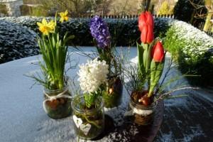 Narzissen, Tulpen und Hyazinthen im Glas als Frühlingsdekoration