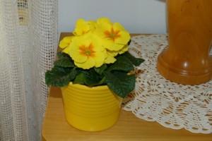 Gelbe Primel als Frühlingsdekoration