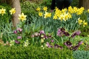 Narzissen verwandeln jeden Garten