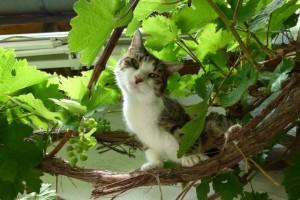 Katze Paula überlegt wie sie ihre Menschen überlistet