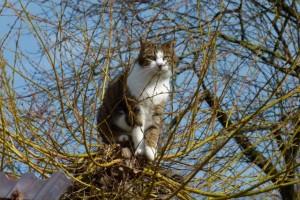 Katze Paula sitzt auf der Weide