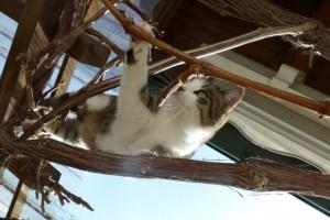 Katze Paula prüft ob der Ast ihr Gewicht aushält