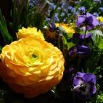 Frühlingsdekoration für drinnen und draußen