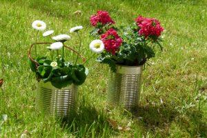 Dosen in verschiedenen Größen sind bepflanzt eine tolle Dekoration