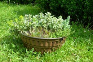 Eine alte Backform wunderschön bepflanzt ist eine tolle Dekoration