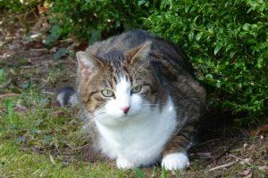 Unsere Katze Paula im Garten